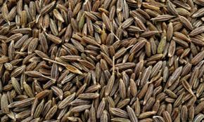 India Cumin Seed
